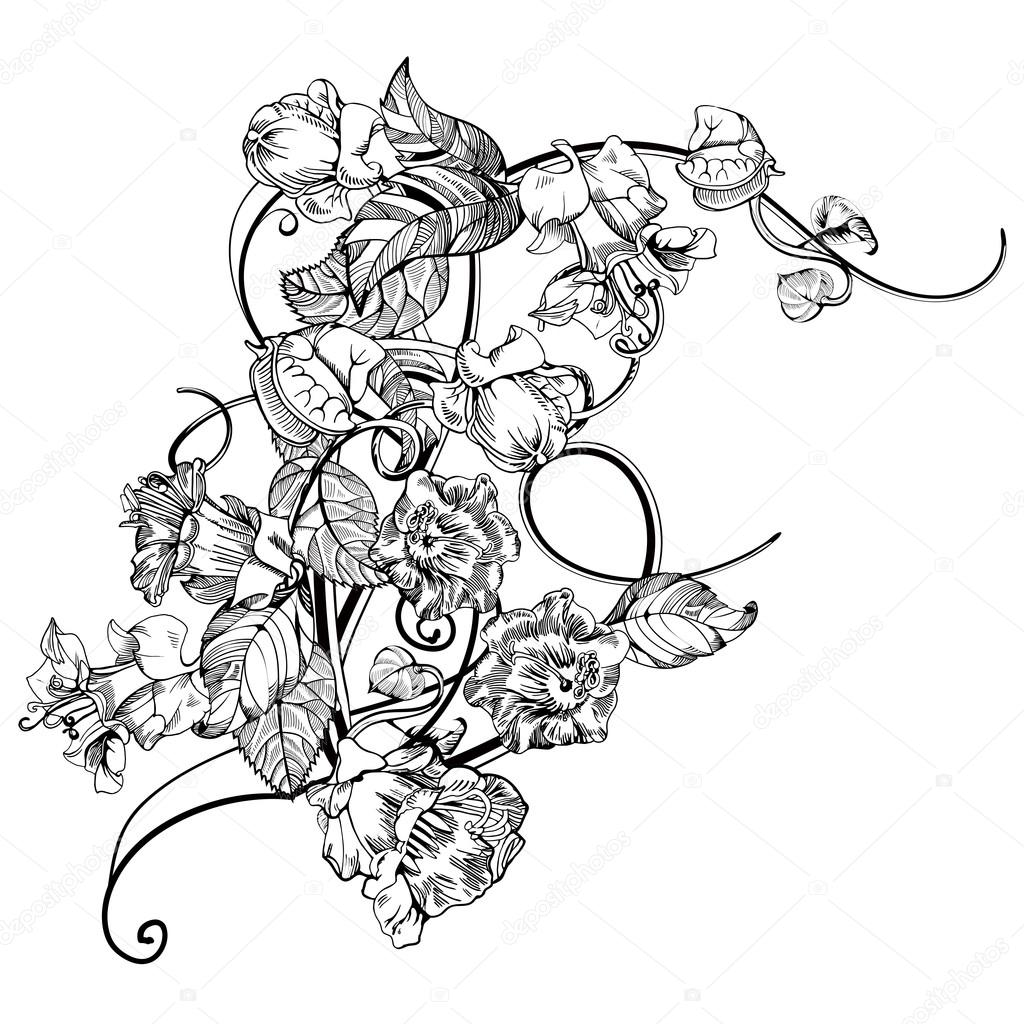 Vintage elegant flowers. Black and white vector illustration. Kobe flower. Botany.