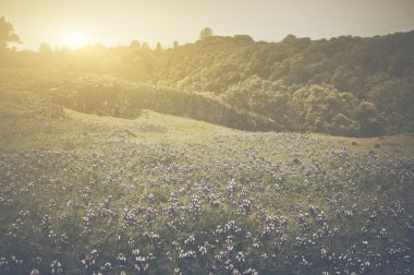 Meadow with Flowers and Sunlight