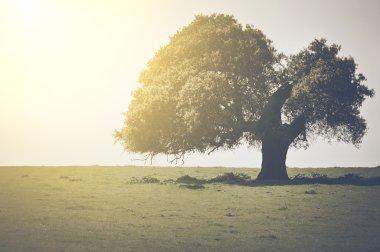 Vintage Oak Tree
