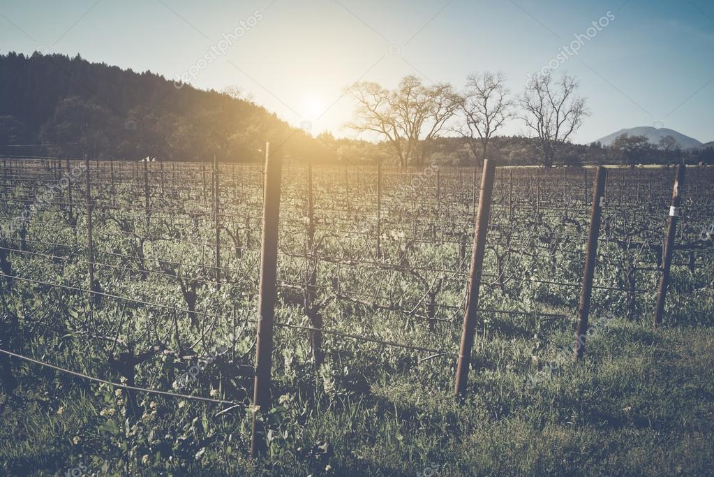 Vineyard in Winter with Film Style Filter