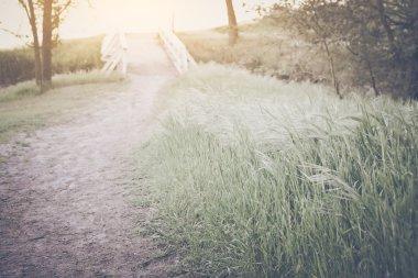 Blurred Nature Trail
