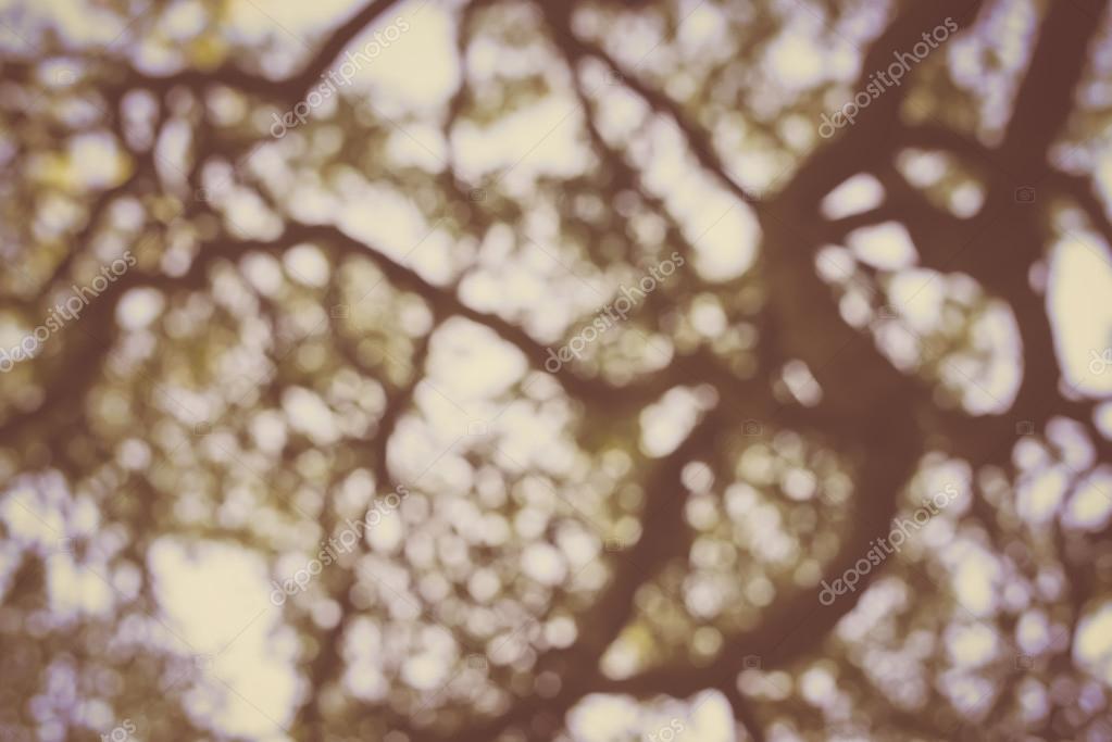 Blurred Tree Branch Background