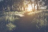 Luce solare nella foresta come sfondo