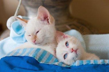 cats asleep