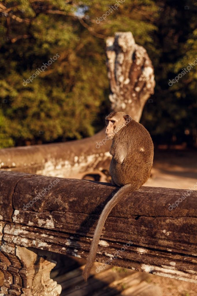 Two monkeys in the Angkor Wat, Cambodia
