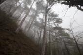 dreamlike foggy forest