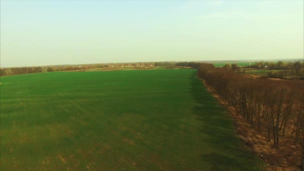 Zelená pole a stromy