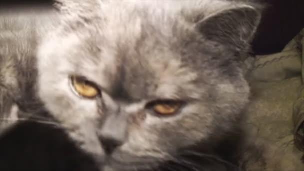 Přítulná kočka matka krmí své děti