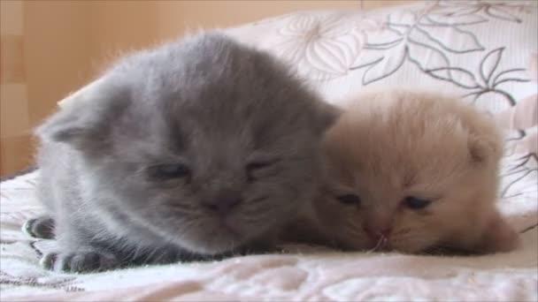 malá koťata