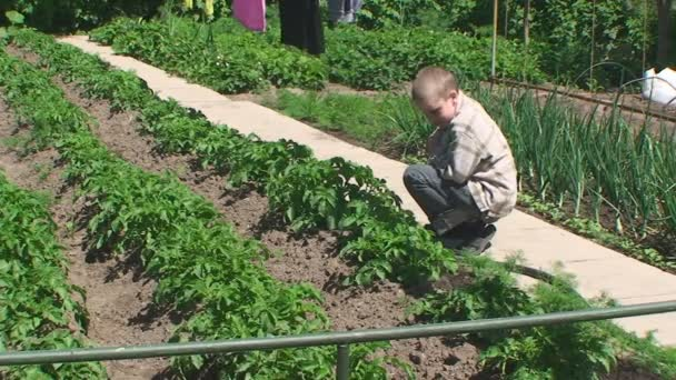 the boy sits in the garden watching the shoots of potatoes