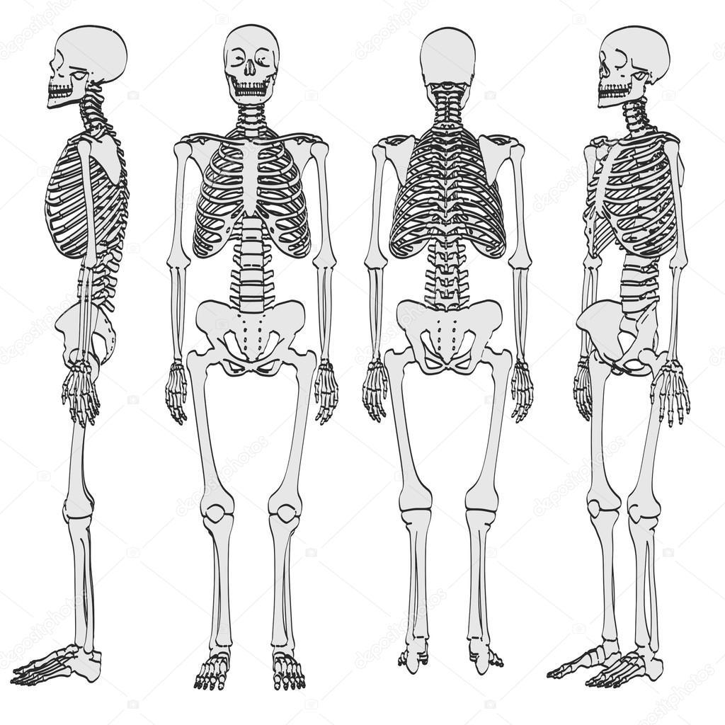 2D ilustración de dibujos animados de esqueleto humano — Fotos de ...