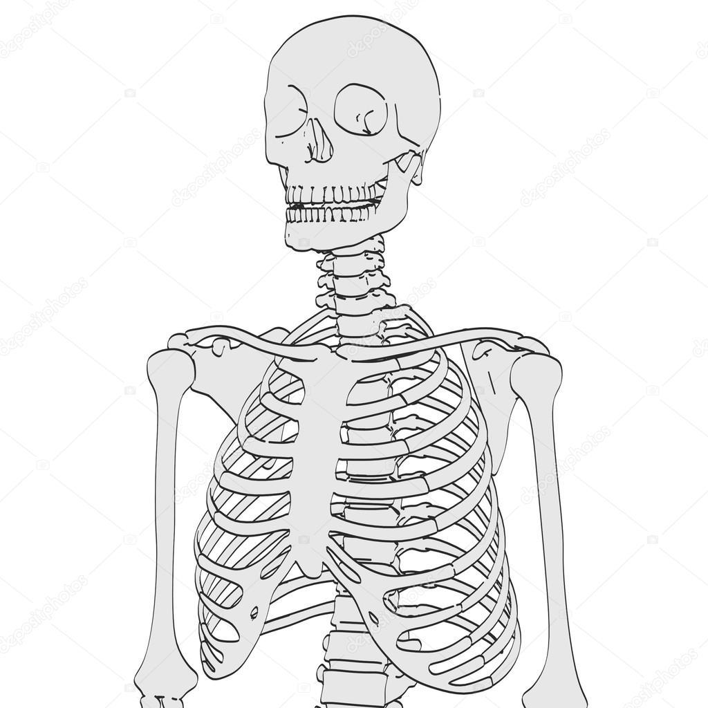 2D ilustración de dibujos animados de esqueleto humano — Foto de ...