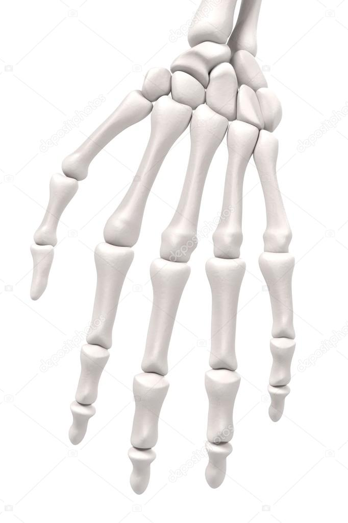 3D Renderings des Hand-Knochen — Stockfoto © 3drenderings #107911280