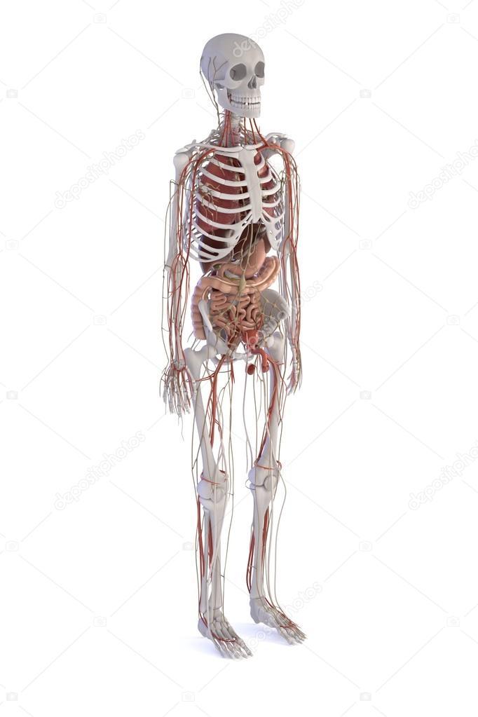 Nett 3d Kopf Anatomie Bilder - Menschliche Anatomie Bilder ...