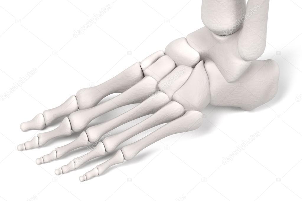 Renders 3D de los huesos de la pierna — Foto de stock © 3drenderings ...