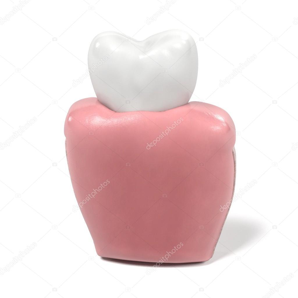 3D Renderings des Zahn-Anatomie — Stockfoto © 3drenderings #108124424