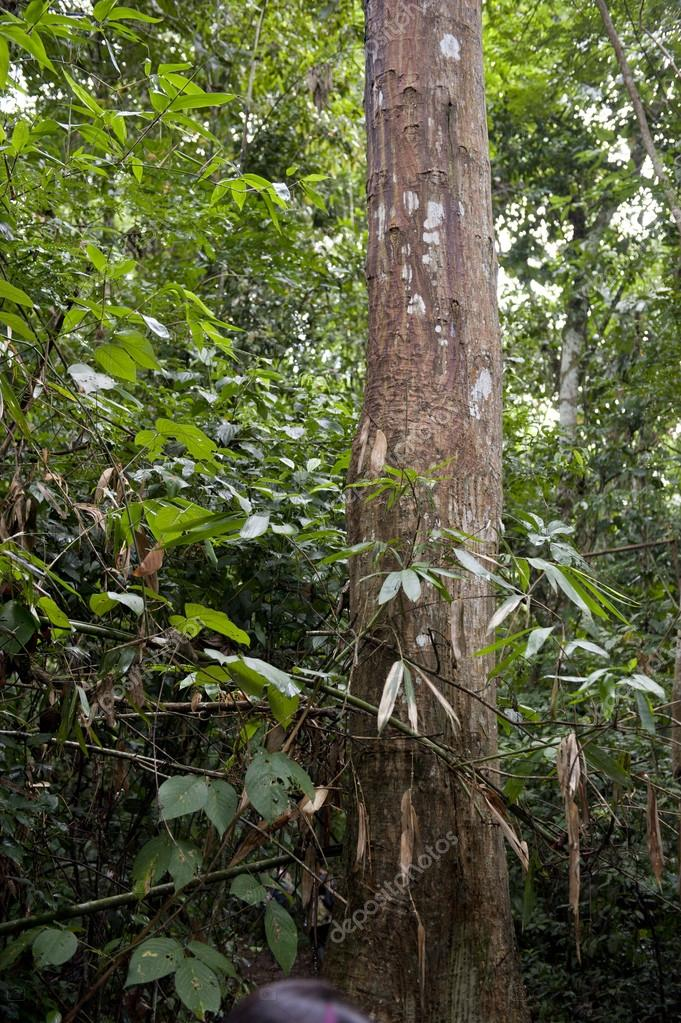 Tambopata Province Forest