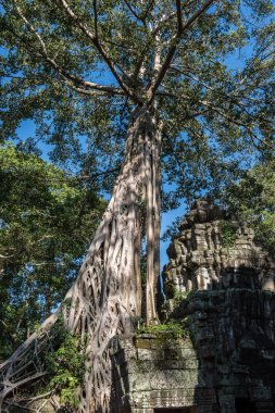 Ta Prohm Architectures
