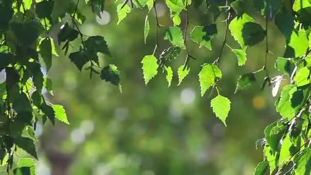 Sonnenstrahlen und grüne Blätter