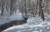 Insenatura nella foresta di inverno nelle colline dei Piccoli Carpazi - Slovacchia