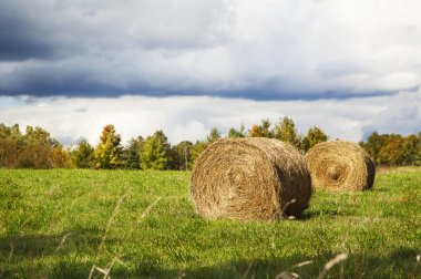 Sheaves of hay lying in a field before the rain