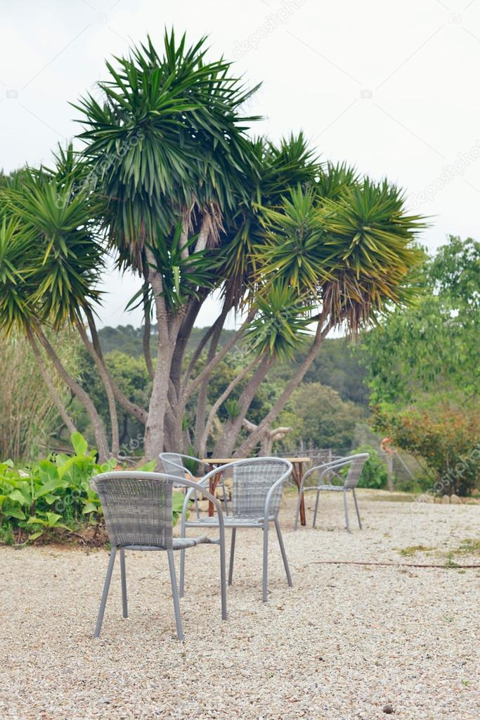 Chairs in garden with yucca tree.