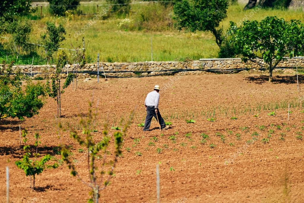 Old farmer walking on land