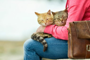 Two cats lying on lap of woman