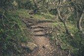 Lesní stezka v Featherbed přírodní rezervace. Knysna. Západní Kapské
