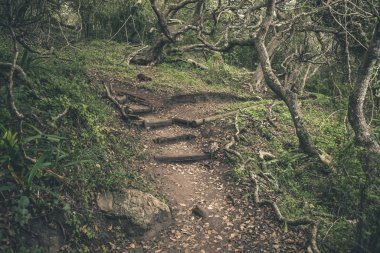 Forest trail in Featherbed Nature Reserve. Knysna. Western Cape.