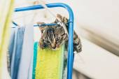 Fényképek Furcsa szürke cirmos cica