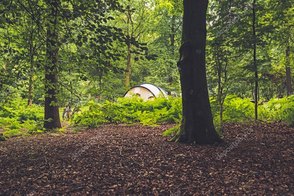 Tent Standing in Forest