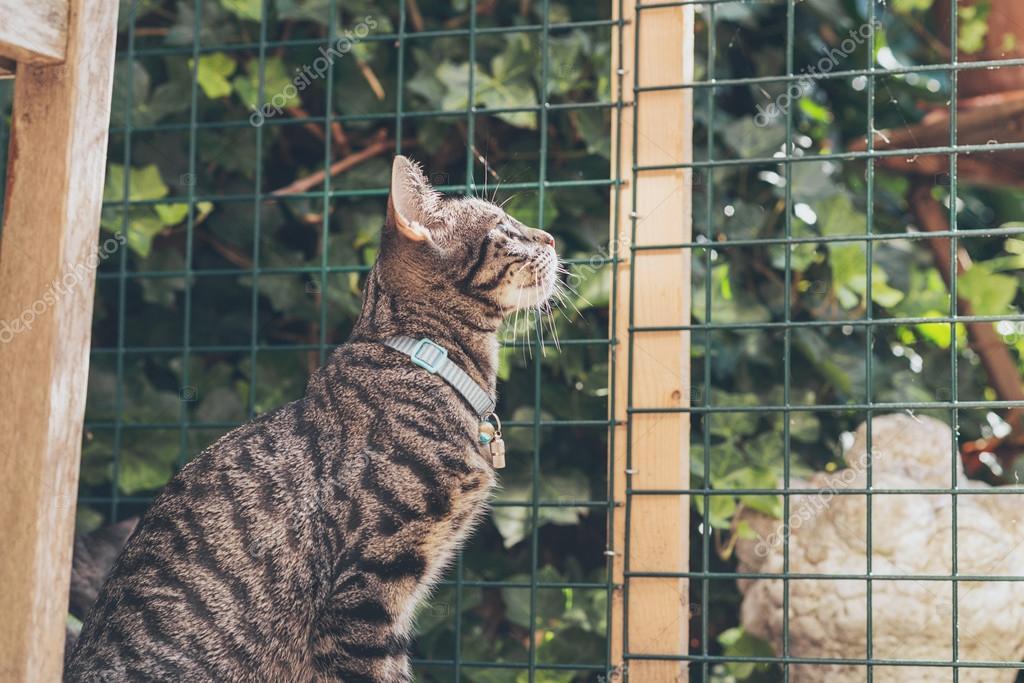 Recinzione Giardino Per Gatti.Gatto Che Osserva Attraverso La Recinzione In Giardino Foto Stock