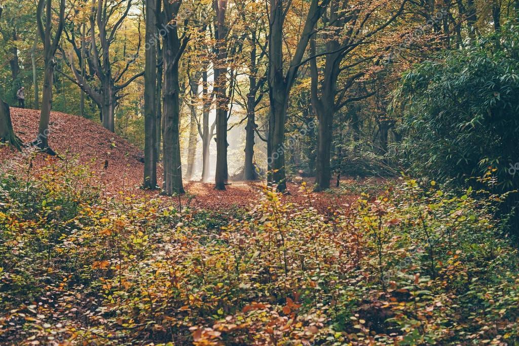 foggy autumn forest.