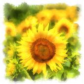Zobrazeno obraz krajina s slunečnicová pole