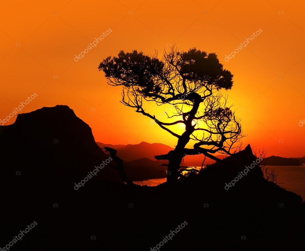 Sunrise in mountains with tree and sea. Crimea landscape.