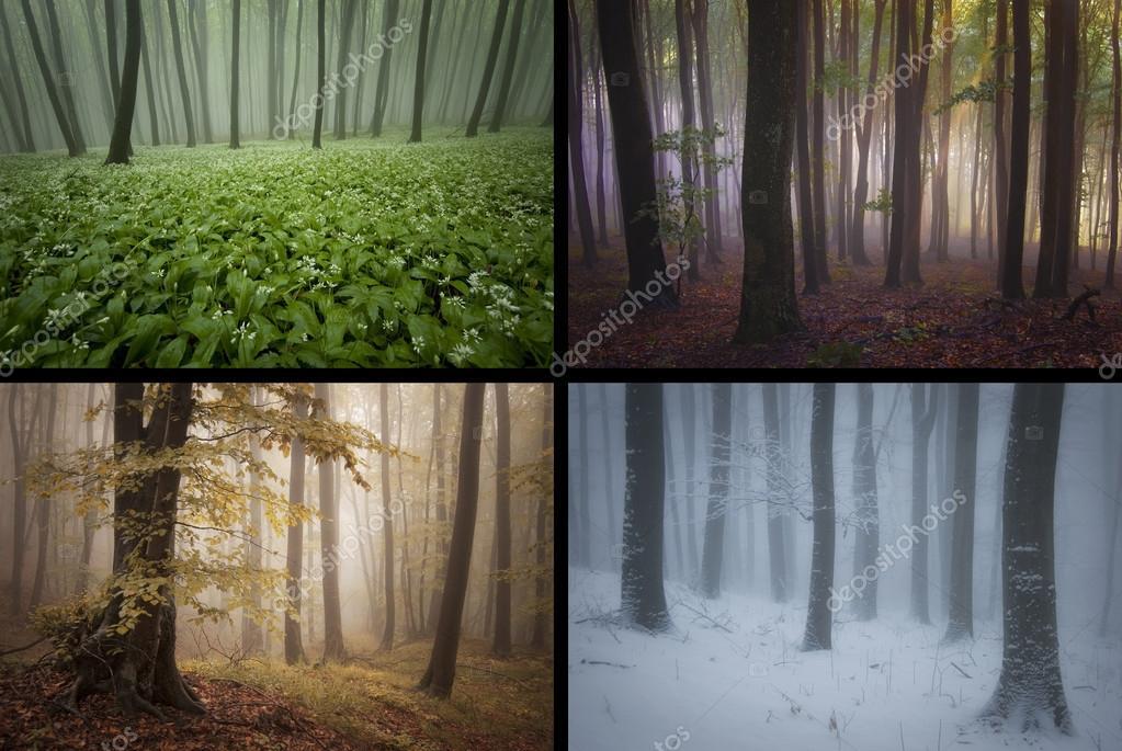 Saisons dans la for t printemps t automne hiver photographie photocosma 71954249 - Printemps ete automne hiver et printemps ...