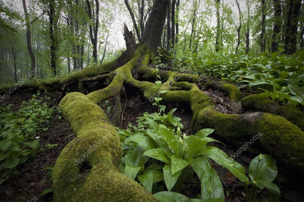 Фотообои roots of tree with moss