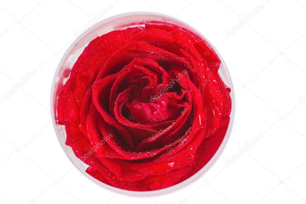 Close-up view of beatiful dark red rose in a glass