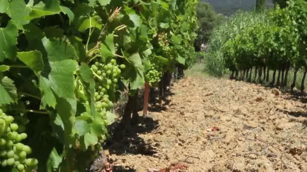 vinice ve Francii