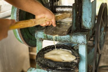 Extracting sugar cane juice with old traditional machine