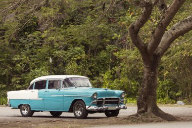 Classic old car under a tree in Cuba
