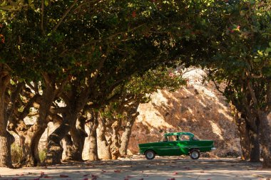 Classic old car under trees in Cuba