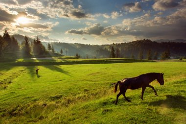 Horses in forest at sunset under cloudy sky