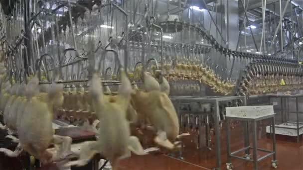 Kuřecí maso továrna