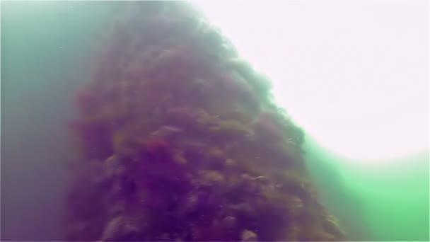 Welpenfischen am Bosporus