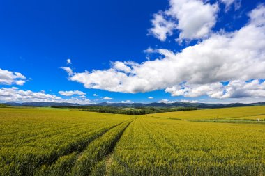 agriculture at remote area, Hokkaido