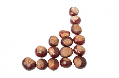 Chestnuts making a chart