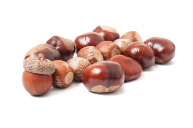 Acorns and chestnuts