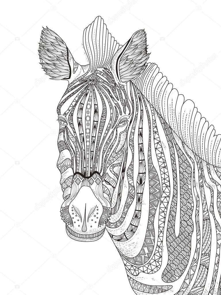 Zebra Volwassen Kleurplaat Stockvector 169 Kchungtw 105628618